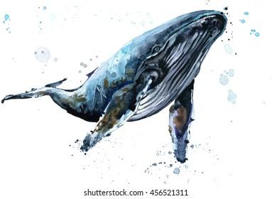 Humpback whale watercolor illustration. Underwater fauna