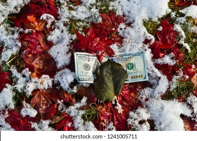 Hundred dollar US bill under red leaves and snow