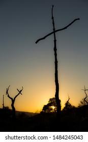 Hundreds of crosses in burned forest of Catalonia