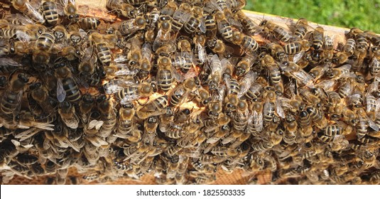 Hundreds of honey bees cuddle up by the beehive on a sunny day in summer