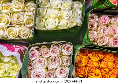 Hundreds of multicolored roses wrapped in paper. Fresh bloom background. Flower growing and production business. Wholesale and retail trade, shipping and logistics