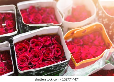 Hundreds of multicolored roses wrapped in paper. Fresh blossom background. Flower growing and production business. Wholesale and retail trade, shipping and logistics