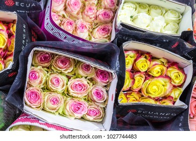 Hundreds of multicolored roses wrapped in paper. Fresh spring store background. Plants growing and production business. Wholesale and retail trade. Flower shipping and logistics
