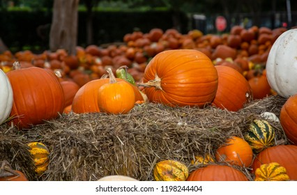 Hundreds of pumpkins lying in a field and on bales of hay