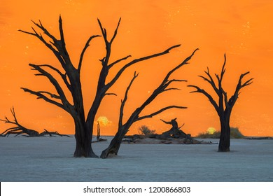 Hundreds of years old tree skeletons in Deadvlei, Namibia.