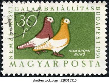 HUNGARY - CIRCA 1957: A stamp printed by Hungary, shows pigeon, circa 1957