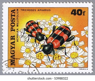 HUNGARY - CIRCA 1980: A stamp printed in Hungary shows Trichodes apiarius, series devoted to insects pollinate flowers, circa 1980