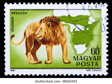 HUNGARY - CIRCA 1981: A stamp printed in Hungary shows Lion - Panthera leo, circa 1981