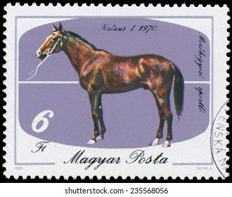HUNGARY - CIRCA 1985: A stamp printed in Hungary shows The 200th Anniversary of Horse Keeping in Mezohegyes, Kr���¶zus-1, circa 1985