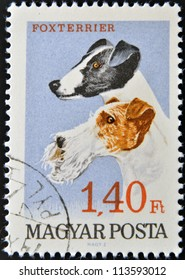 HUNGARY - CIRCA 1990: A stamp printed in Hungary shows Foxterrier, circa 1990
