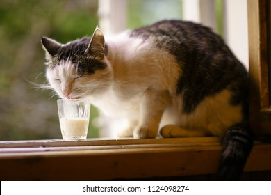 hungry cat drink milk from glass on windowsill on summer green background