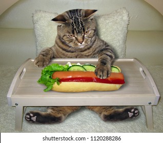 The hungry cat eats a hot dog on the bed.