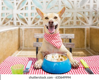 hungry chihuahua dog eating with tablecloth utensils at the table , food  bowl , fork and knife