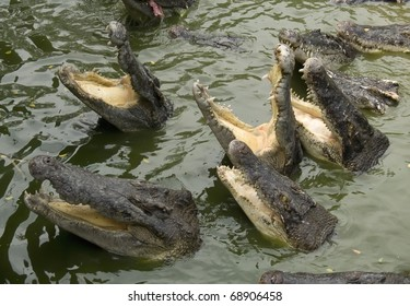 Hungry Crocodile Images, Stock Photos & Vectors | Shutterstock