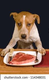 Hungry Dog.