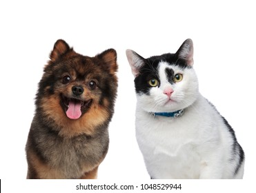 hungry dog and cat friends waiting for lunch while standing on a white background
