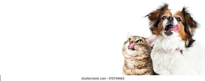 饥饿的狗和猫舔嘴唇水平横幅与复制空间大小的流行社交媒体网站封面图片