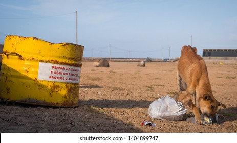 Hungry dog eating trash bag out of a can looking for food in a garbage dump. Sad scene of an animal loneliness.  Translation: Think in the future is acting in the present. Protect the environment