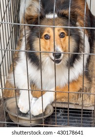 Hungry dog with its paws in bowl locked in the cage.