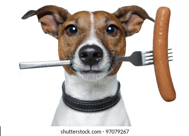 hungry dog with a sausage on the fork