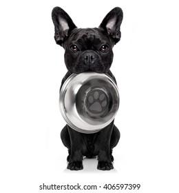 chien-taureau français affamé tenant un bol à la bouche, isolé sur fond blanc