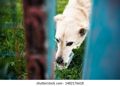 Hungry homeless dog  drinking water from a plastic bowl. Close up