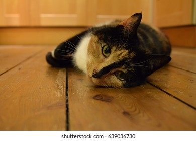Cat Wants Food HD Stock Images | Shutterstock