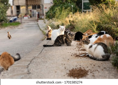 Hungry multicoloured homeless stray cats sitting on the sidewalk eating cat food given food  by volunteers in downtown Dubrovnik, Dalmatia, Croatia. Surrounded by greenery on a sunny day