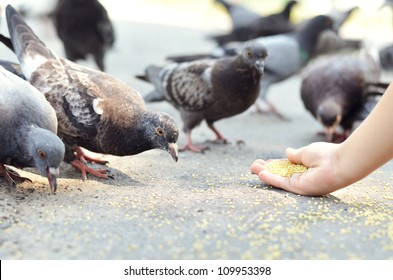 Hungry pigeons eating millet from child's hand in the street