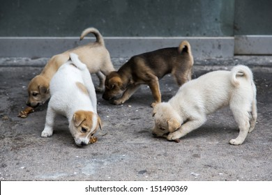 Hungry puppies eating on the ground