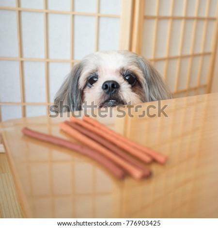 Hungry Shih Tzu Dog Looking Snack Stock Photo Edit Now 776903425
