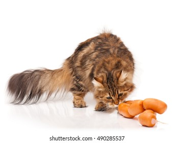 Hungry siberian cat biting delicious sausages over white background