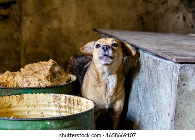 Hungry stray dog with bowl. Concept of homeless animals, homeless dog.