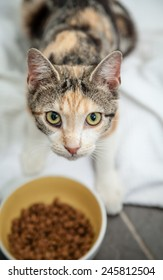 Hungry and thin stray calico tortoiseshell tabby cat with scars on nose looking up and making eye contact while eating dry food from a yellow bowl on the floor