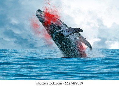 hunt of whales while blooding and jumping dramatic scene