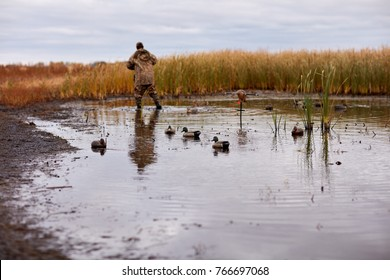 Hunter deploying waterfowl decoys in wetlands in a muddy pond fringed with dry reeds under a cloudy sky