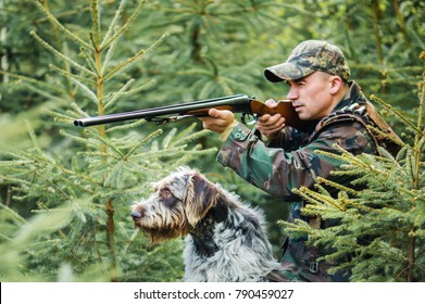 Hunter with a german wire-haired dog in a pine forest, hunt