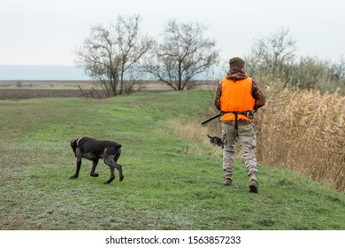 A hunter with a gun in his hands and a hunting dog in a reflective orange vest hunts a pheasant in the steppe.