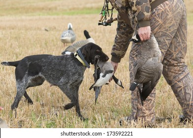 A hunter and his dog goose hunting
