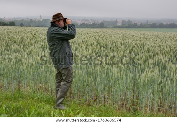 A hunter stands by a wheat field and observes his hunting area through binoculars on a rainy, foggy morning in June. In the background you can see the small town of Trossingen in Germany.