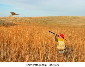 hunter taking aim at rooster pheasant