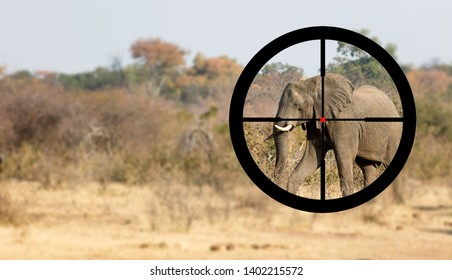 Hunting: African elephant in it's natural habitat, view of a hunter