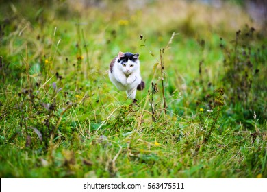 hunting cat jumping through grass
