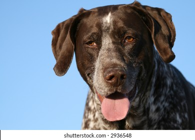 """hunting dog asks """"what's your problem"""""""
