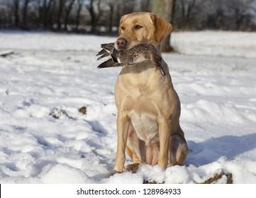 aadaa7e24c7ca Duck Hunting Dog Images, Stock Photos & Vectors | Shutterstock