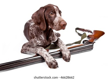 Hunting dog with a gun on a white background