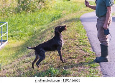 Hunting dog playing with his master