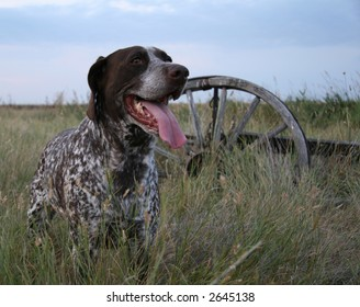 hunting dog with wagon wheel in background