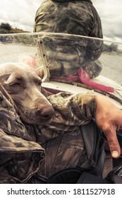 Chien de chasse Weimaraner reposant sur son chasseur propriétaire main après chasse pendant la saison de chasse concept chien et amitié humaine