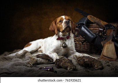 hunting dog with woodcock